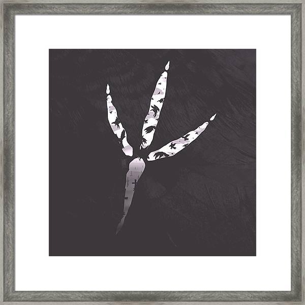 Crow's Foot Framed Print