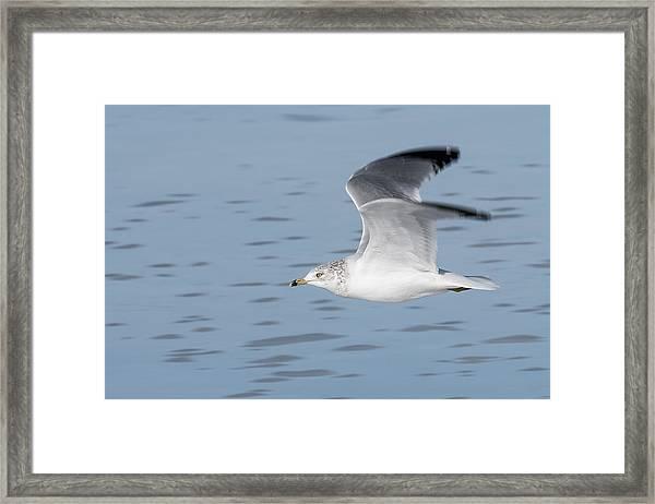 Cruising Altitude Framed Print