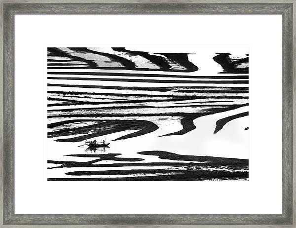 Cruising On A Zebra Framed Print
