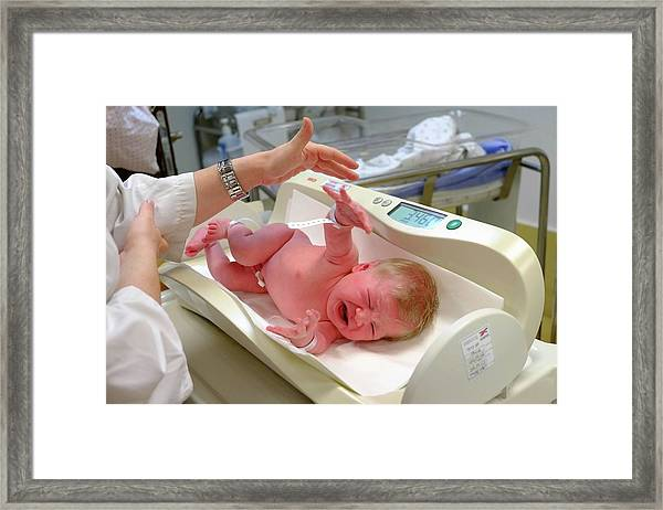 Crying Baby Girl Is Being Weighed Framed Print