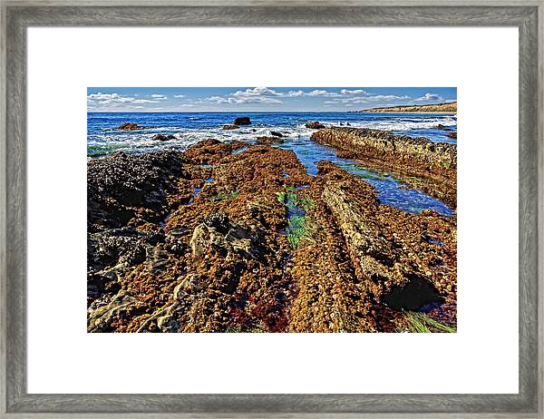Crystal Cove Tide Pools  Framed Print by Donna Pagakis