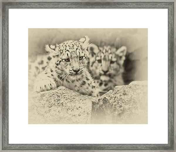 Cubs At Play Framed Print