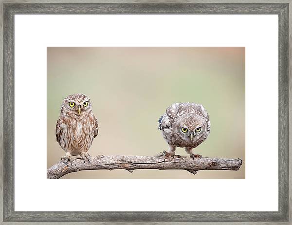 Curiosity Of Chick Framed Print