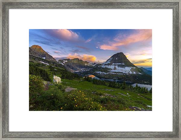 Framed Print featuring the photograph Curious Goat by Dustin  LeFevre