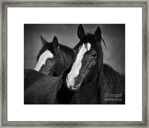 Curious Horses Framed Print