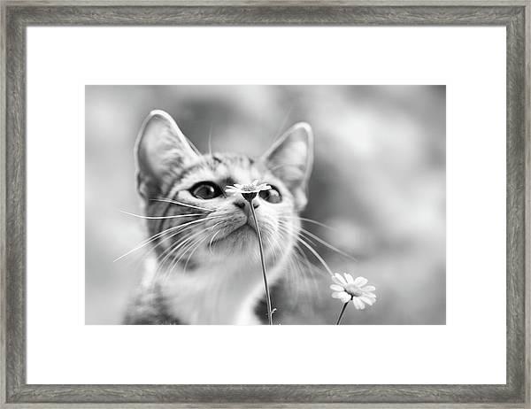 Curious Framed Print by Mirjam Delrue