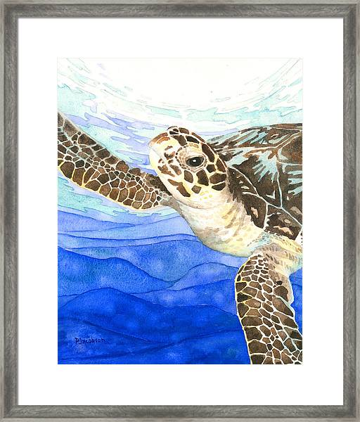 Curious Sea Turtle Framed Print