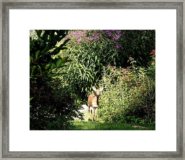 Curious Youngster Framed Print