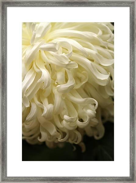 Curly Petals Framed Print