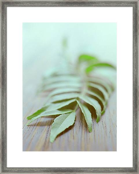 Curry Leaves Framed Print