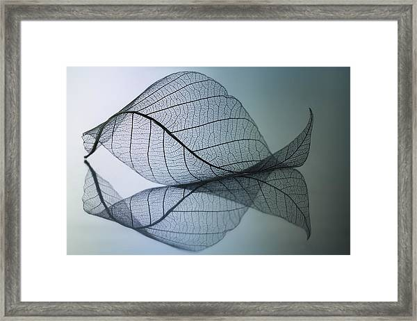 Curvaceousness Framed Print