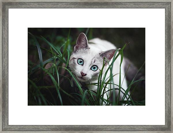 Cute Blue Eyed Cat In The Grass Framed Print