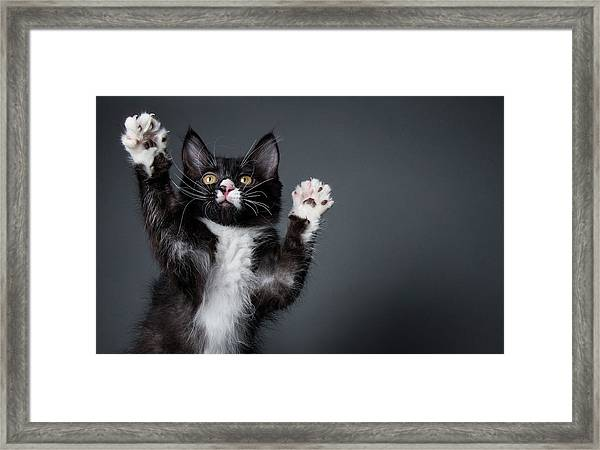 Cute Kitten Playing - The Amanda Framed Print by Amandafoundation.org