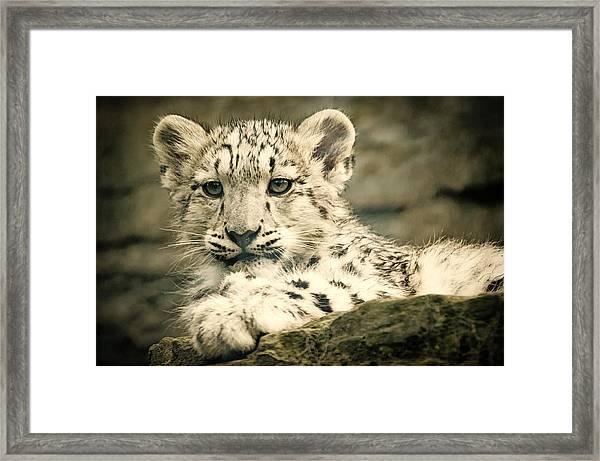 Cute Snow Cub Framed Print