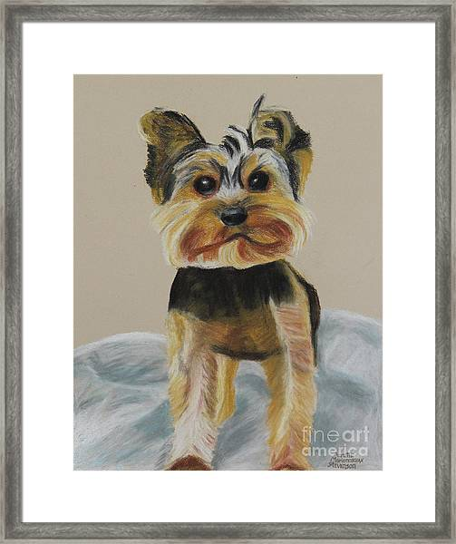 Cute Yorkie Framed Print