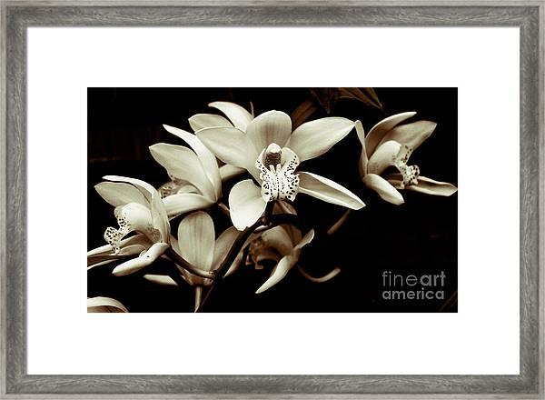 Cymbidium Orchids Framed Print