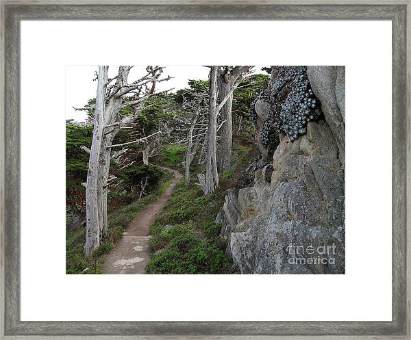 Cypress Grove Trail Framed Print