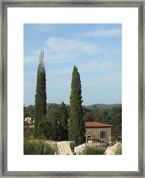 Cypress In Rapolano Framed Print