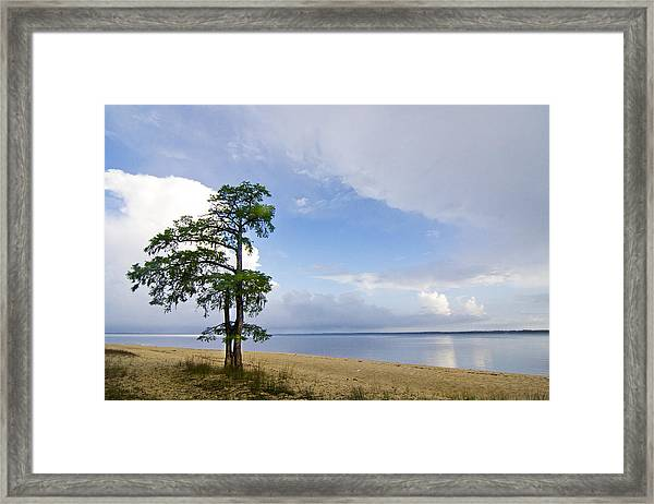 Cypress On The Neuse Framed Print