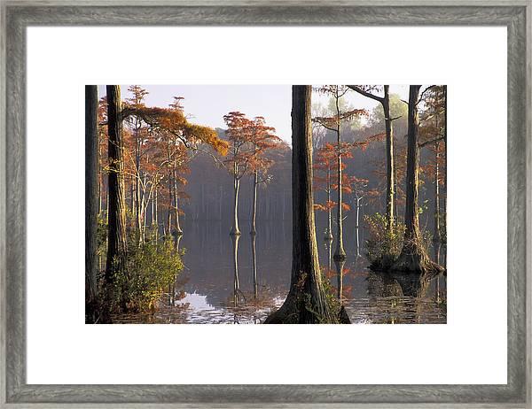 Cypress Pond Framed Print