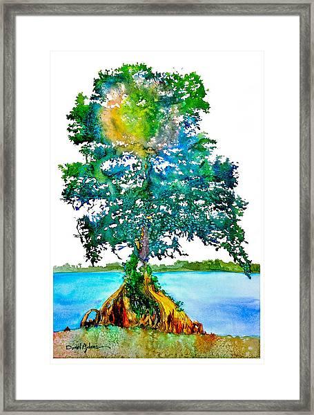 Da107 Cypress Tree Daniel Adams Framed Print