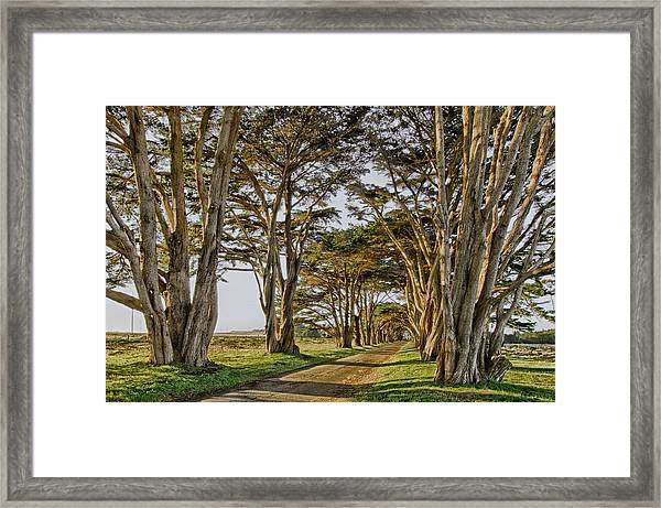 Framed Print featuring the photograph Cypress Tunnel by Robert Rus