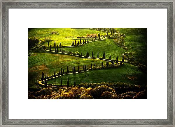 Cypresses Alley Framed Print