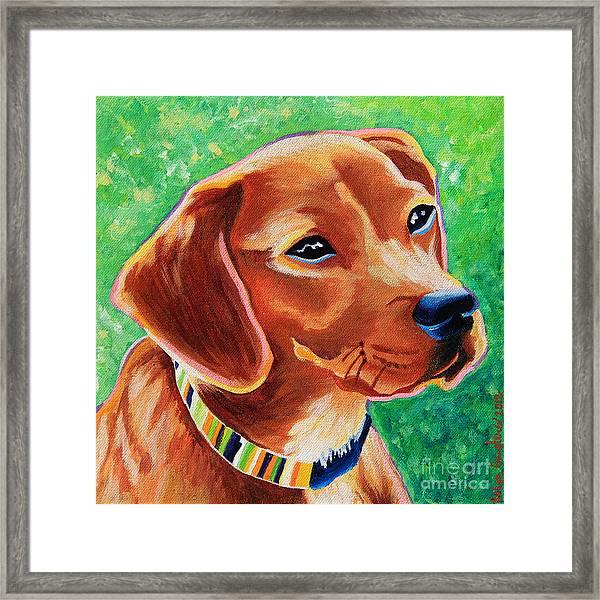 Dachshund Beagle Mixed Breed Dog Portrait Framed Print