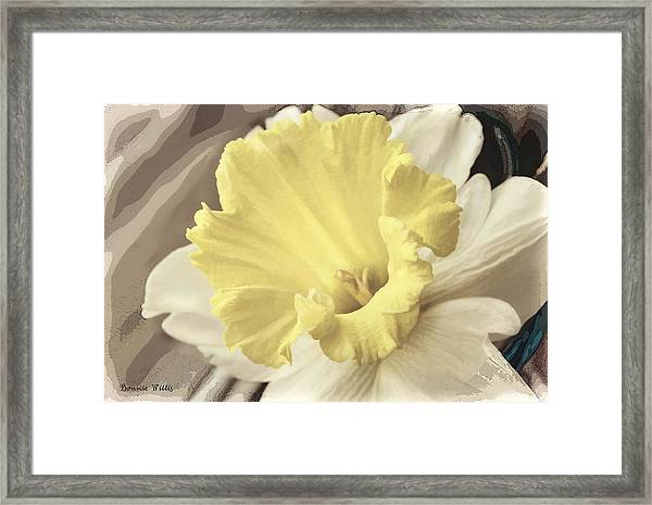 Daffadil In Yellow And White Framed Print