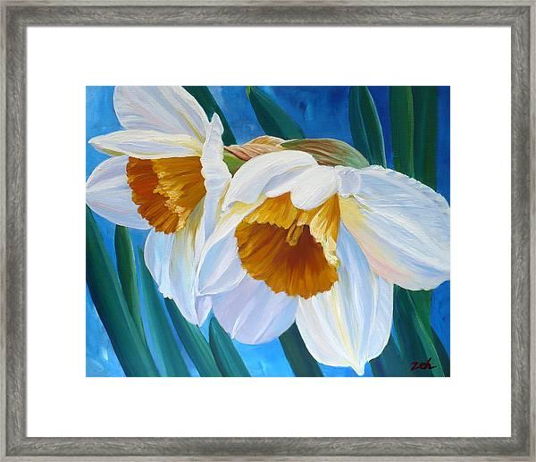 Daffodils Narcissus Framed Print