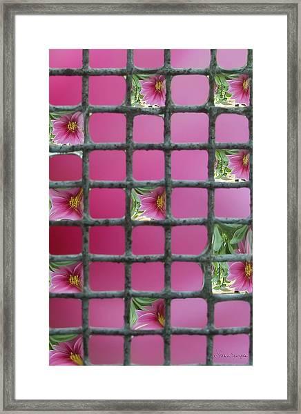 Dahlia Dew Framed Print