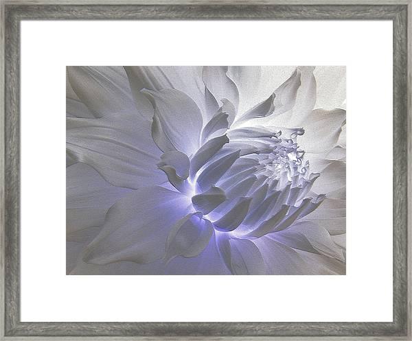 Dahlia Inner Beauty Framed Print