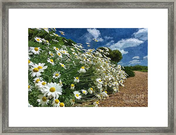 Daisies By The Path - Photo Art Framed Print