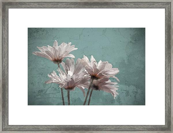 Daisies V Framed Print
