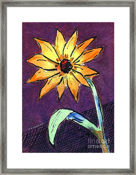 Daisy On Dark Background Framed Print