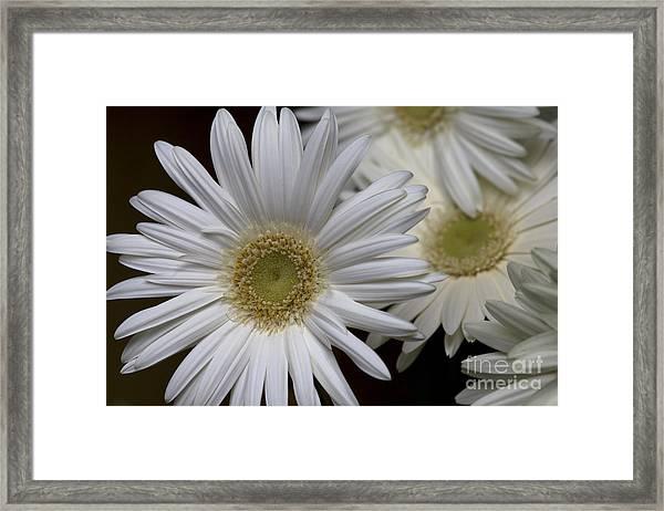 Daisy Photo Framed Print