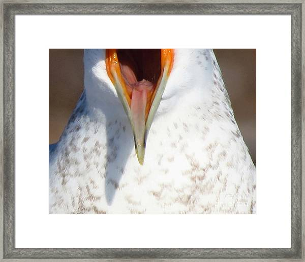 Damn Gull Moved Framed Print