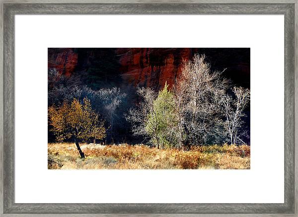 Dance Of Trees Framed Print