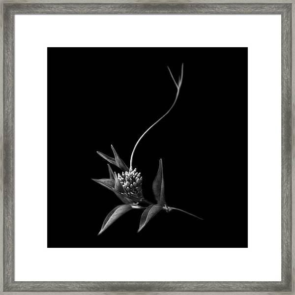 Dance With Me, She Said ... Framed Print by Artistname