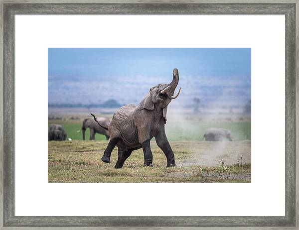 Dancing Elephant Framed Print by Jeffrey C. Sink