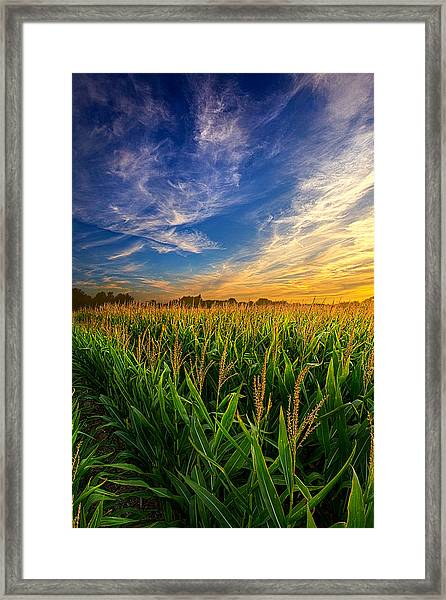 Dancing In The Rows Framed Print