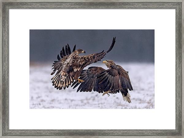 Dancing In The Snow Framed Print by Xavier Ortega