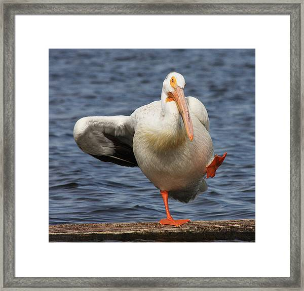 Dancing The Funky Chicken Framed Print