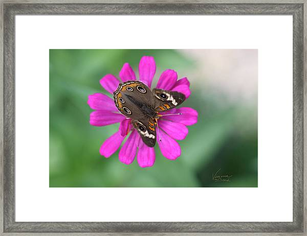 Dancing With Nature Framed Print