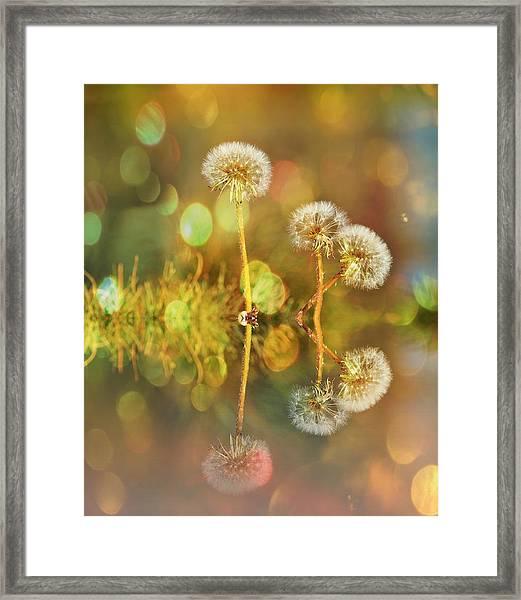 Dandelion Delight Framed Print