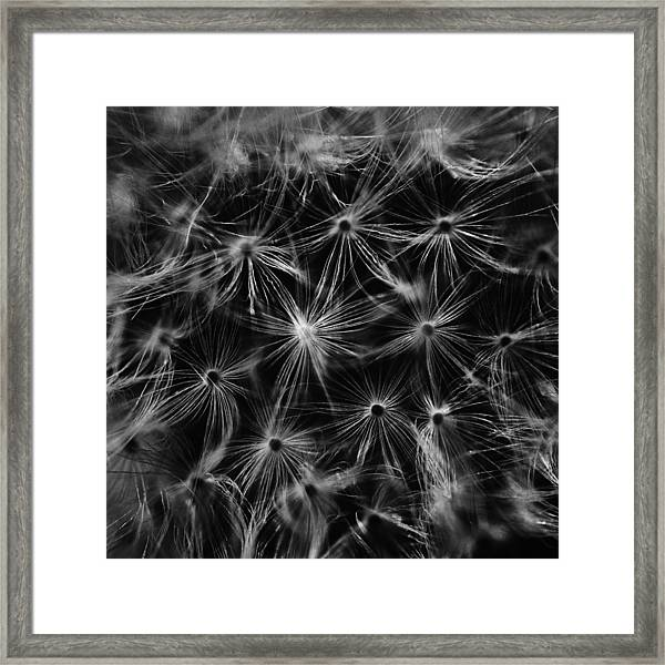 Dandelion Detail Black And White Framed Print
