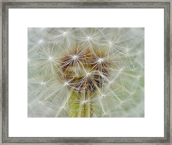 Dandelion Matrix Framed Print