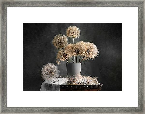 Dandelion Seed Pod Framed Print by Lydia Jacobs