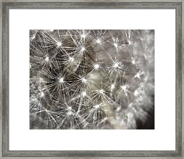 Dandillion Seed Head 2 Framed Print