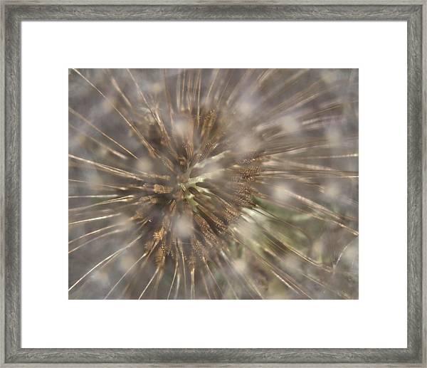 Dandillion Seed Head Framed Print
